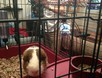 Behind the Scenes of Tendenci's Guinea Pig Ad - Carl Again