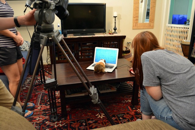 Behind the Scenes of Tendenci's Guinea Pig Ad