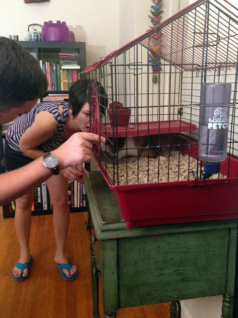 Behind the Scenes of Tendenci's Guinea Pig Ad - Checking on Carl